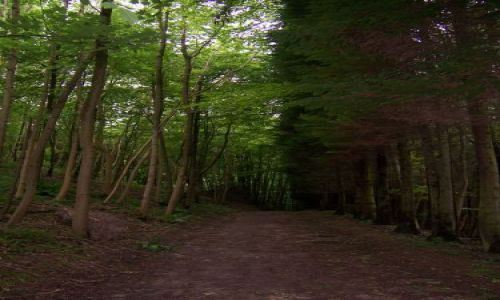 Zdjecie WIELKA BRYTANIA / Glocestershire / nieopodal Cirencester / Droga w lesie....
