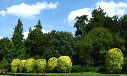 Zdjęcie WIELKA BRYTANIA / Oxfordshire / Bicester / W parku