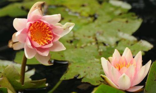 Zdjęcie WIELKA BRYTANIA / Londyn  / Okolice Canada Water / ... rozowe