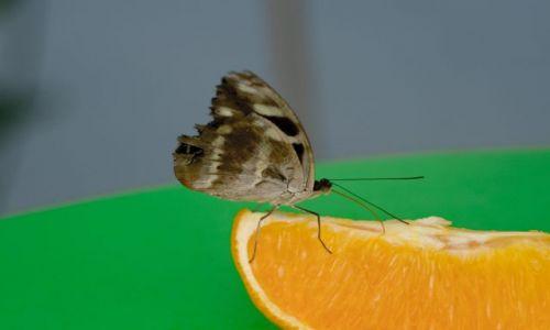 Zdjecie WIELKA BRYTANIA / The Natural History Museum / Londyn / Motyl 1