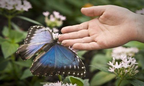 Zdjecie WIELKA BRYTANIA / The Natural History Museum / Londyn / Motyl 3