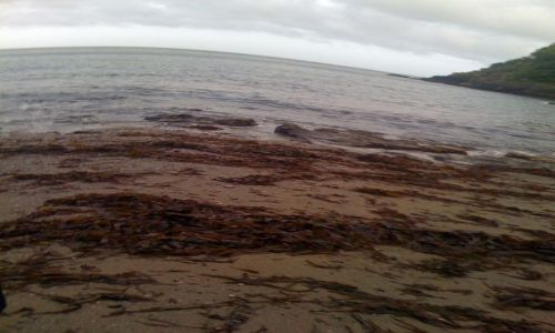 Zdjęcie WIELKA BRYTANIA / Devon / Dartmouth / Plaża w Dartmouth
