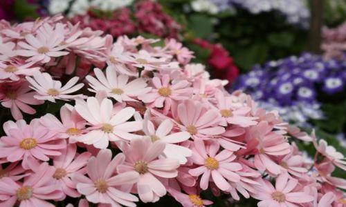 Zdjęcie WIELKA BRYTANIA / Irlandia Północna / Belfast / W ogrodzie botanicznym