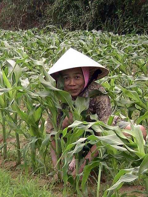 Zdj�cia: Hoi An, Srodkowy Wietnam, Kobieta na roli, WIETNAM