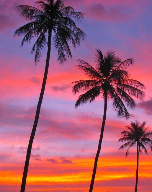 Zdjęcia: mui ne, wietnam, palmy, WIETNAM