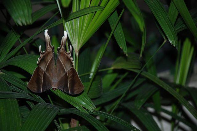 Zdjęcia: Tay Ho, Hanoi, Motylem jestem!, WIETNAM