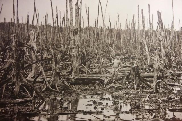 Zdjęcia: Muzeum Wojny Sajgon, Sajgon, Dżungla po czynniku pomarańczowym, WIETNAM