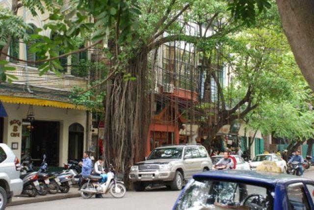 Zdjęcia: Pho Trang Thi, Hanoi, Przyroda Hanoi, WIETNAM