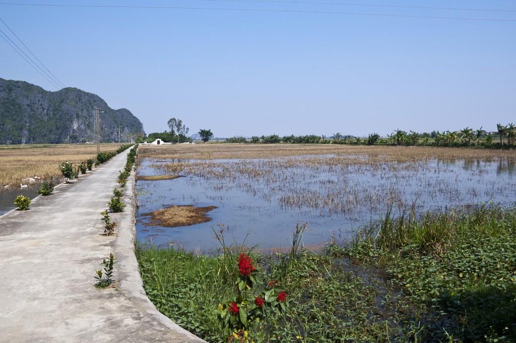 Zdjęcia: Okolice Ninh Binh, Ninh Binh, Pole ryżowe, WIETNAM