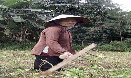 Zdjecie WIETNAM / Srodkowy Wietnam / Hoi An / Kobieta na roli