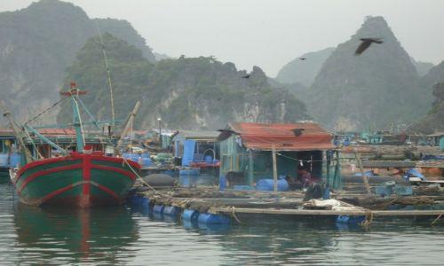 Zdjęcie WIETNAM / Quang Ninh / północny Wietnam / Zatoka Ha Long / Pływające wioski