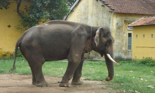 Zdjecie WIETNAM / Thua Thien-Hue / środkowy Wietnam / Hue / Ciężkie życie słonia
