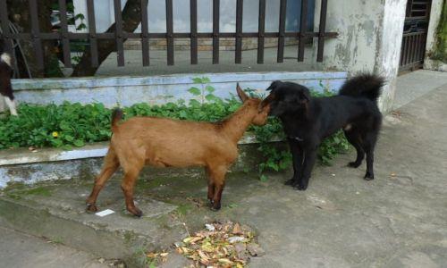 Zdjęcie WIETNAM / Thua Thien-Hue / Hue / Czy jest możliwa przyjaźń wśród zwierząt ?