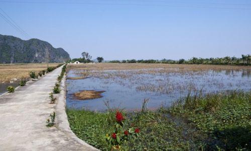 WIETNAM / Ninh Binh / Okolice Ninh Binh / Pole ryżowe