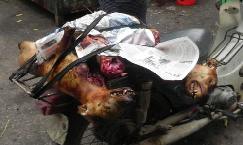 Zdjęcie WIETNAM / hanoi / bazar / psie mięso