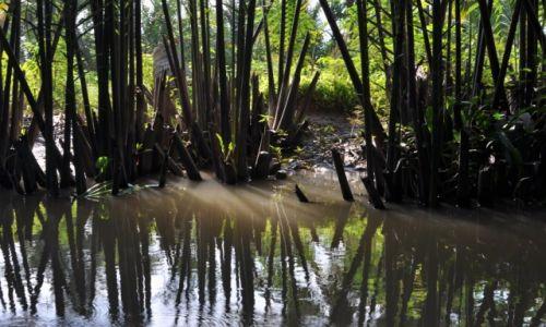 WIETNAM / delta Mekongu / okolice Can Tho / Płynąc kanałami