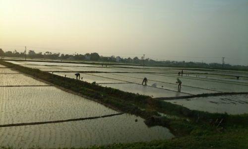 Zdjęcie WIETNAM / okolice Hoi an / okolice Hoi an / w polu