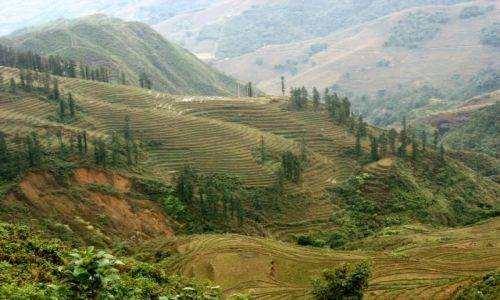 Zdjęcie WIETNAM / Wietnam Północny / okolice Sapa / Tarasy w okolicy Sapa