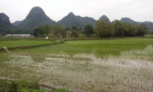 Zdjecie WIETNAM / Wietnam Północny / Ninh Binh / Pola ryżowe