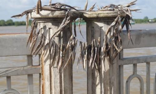 Zdjęcie WIETNAM / południowy Wietnam / Delta Mekongu / Rybki
