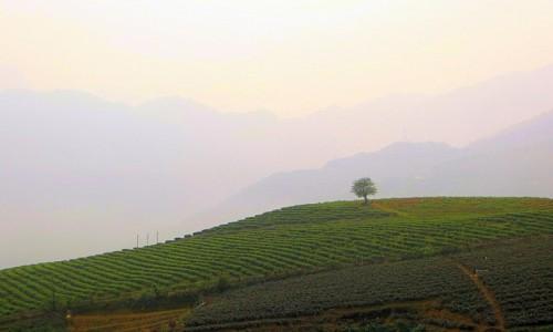Zdjęcie WIETNAM / północny Wietnam / okolice przełęczy Tram Tom / Samotne drzewo