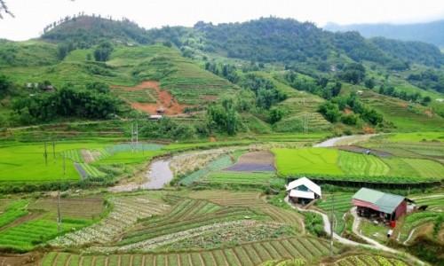 WIETNAM / Lao Cai / Sa Pa / Pola ryżowe