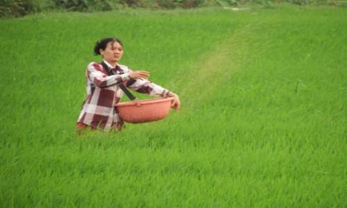 Zdjecie WIETNAM / północ / Ninh Binh / Dzień jak codzień