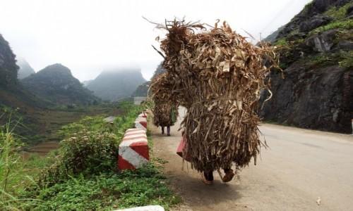 Zdjecie WIETNAM / północ / Ha Giang / Praca