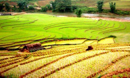 Zdjecie WIETNAM / brak / góry w okolicach Sapa / terasy ryżowe