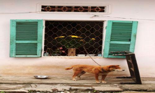 Zdjecie WIETNAM / Północny Wietnam / Hanoi / zapewne jest pod ostrzałem:)