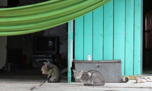 Zdjecie WIETNAM / Okolice Hanoi / W Zatoce Ha Long / kocia niewola