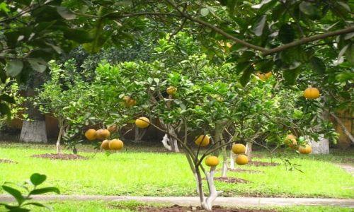 Zdjęcie WIETNAM / brak / Hanoi / parki Hanoi