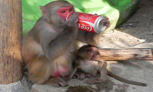 Zdjecie WIETNAM / srodkowy wietnam / ,,, / coca cola
