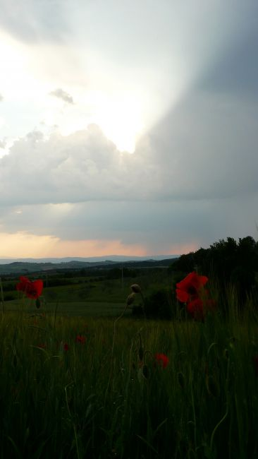 Zdjęcia: Okolice Pienzy, Toskania, Gdzieś w Toskanii przed burzą, WłOCHY