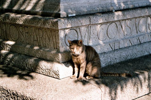 Zdjęcia: Triest - kot triesteński :-) , Triest, WłOCHY