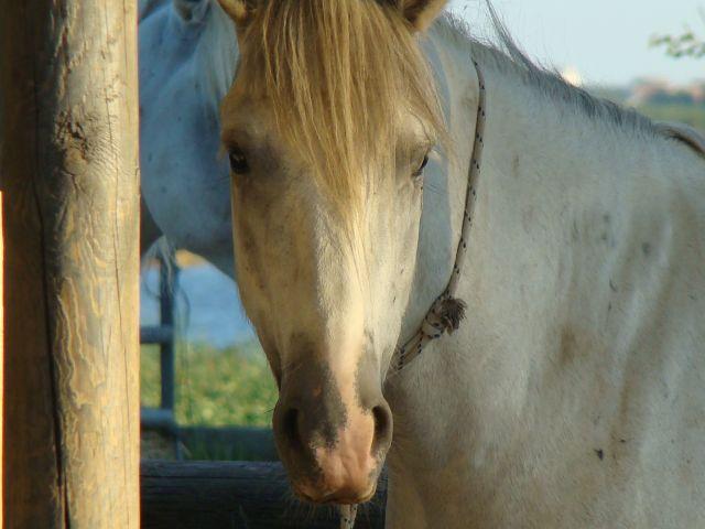 Zdjęcia: stadnina koni, stadnina w lido di volano, WłOCHY