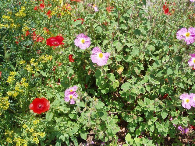 Zdjęcia: Pomarance, Toscana, Roślinność w Toscanii, WłOCHY