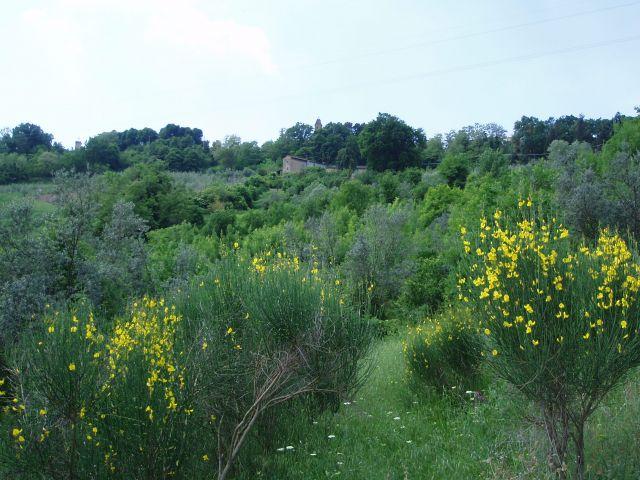 Zdjęcia: Pomarance, Toscana, Widoczek, WłOCHY