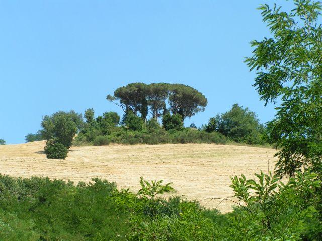 Zdjęcia: Miasto -cytadela, Marche, Pinie, WłOCHY