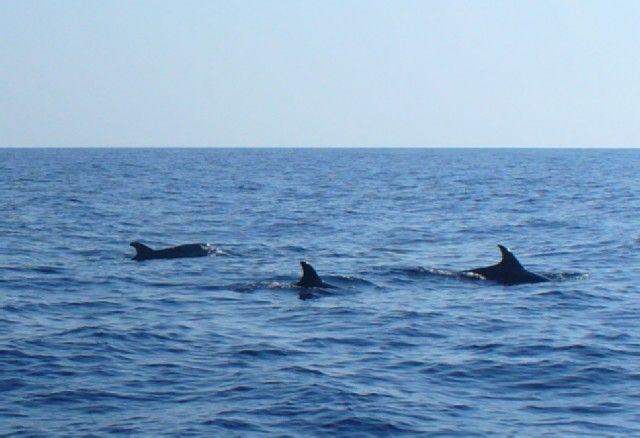 Zdjęcia: okolice Bari, Adriatyk, Delfiny, WłOCHY