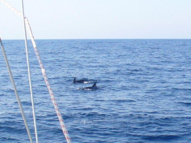 Zdjęcia: okolice Bari, Adriatyk, Delfiny 2, WłOCHY