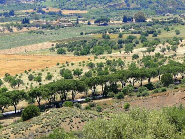 Zdjęcia: Agrigento, Sycylia, Z podróży po Sycylii - Agrigento (8), WłOCHY