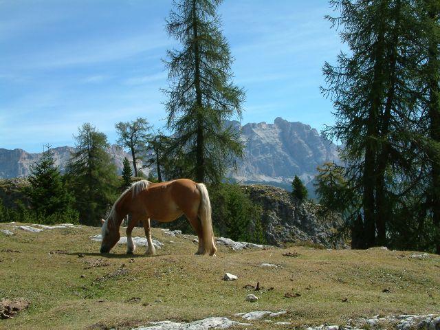 Zdjęcia: alpy, torino, widok 4, WłOCHY
