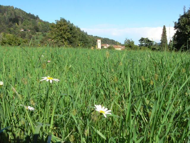 Zdjęcia: pollone, ŁĄCZKA, WłOCHY