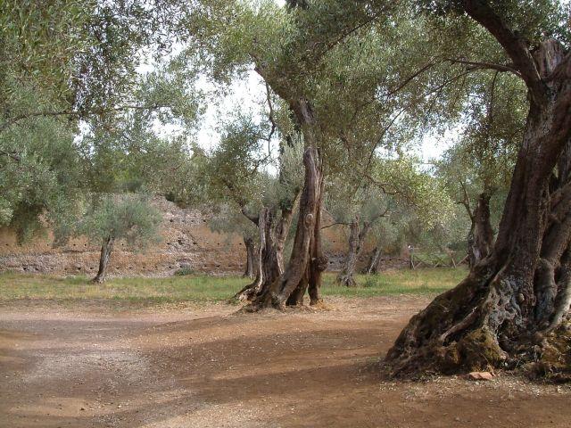 Zdjęcia: Tivoli, okolice Rzymu, ogrody w willi Adriana, WłOCHY