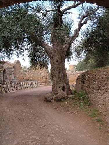 Zdj�cia: Tivoli, okolice Rzymu, w willi Adriana, W�OCHY