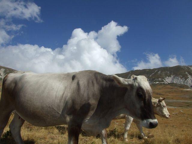 Zdjęcia: Apeniny, w Pasmie Corno Grande, WłOCHY