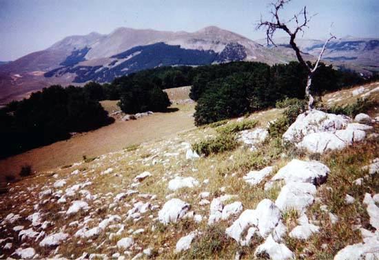 Zdjęcia: Abruzzo, Abruzzo, W Narodowym Parku Abruzzo, WłOCHY
