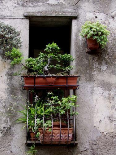 Zdj�cia: Bracciano, Lazio, okienka, W�OCHY