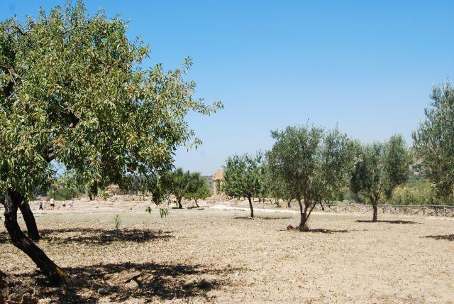 Zdj�cia: AGRIGENTO, SYCYLIA, �wi�tynia Castor i Pollux'a , W�OCHY